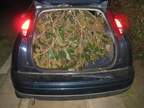 unidentified branches in back of 2000 Ford Focus hatchback