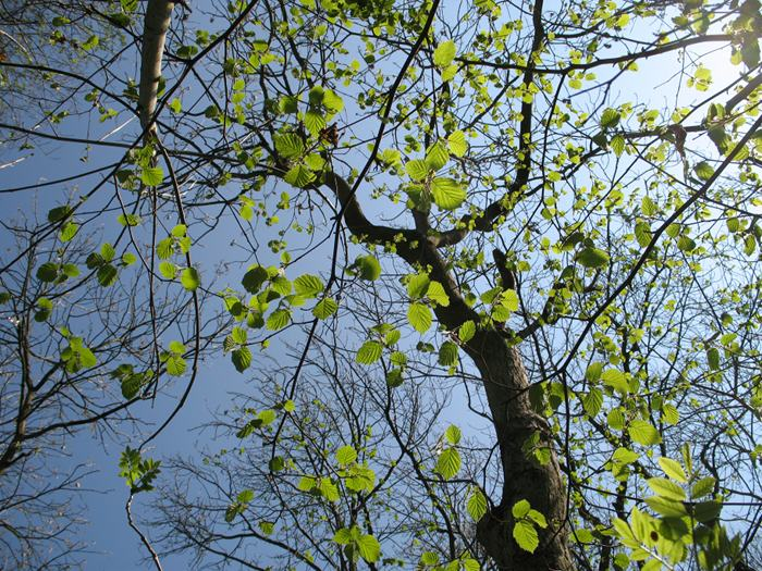 Leaves, sky