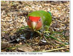 DSC01401 (John P Norton) Tags: bird fauna normal f43 1320sec sonydsct20 copyright2009 focallength19mm