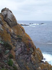Headland Cove (tmrae) Tags: coast monterey pacific pointlobos