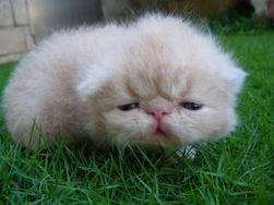 調整大小kitten140_0503223148_1323459161