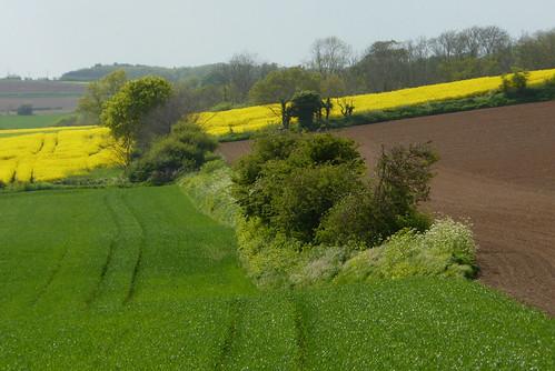 Spring fields near Shotley