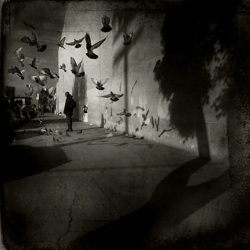 Pigeons and Shadows by LJ.