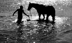 You can take your horse to the water.... (Gremxul) Tags: shadow sea blackandwhite bw horse water monochrome silhouette composition contrast canon highcontrast malta shades powershot g10 blackwhitephotos canong10 canong10powershot gremxul