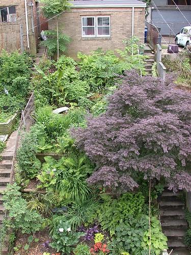 Garden_mid_June