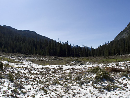 Spider Meadow 007