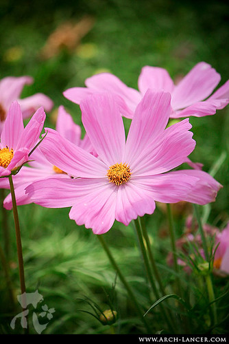 P_flower09