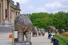 Elephants at Tervuren Museum (piposys) Tags: elephant museum spring belgium april snapshots tervuren onderweg botha
