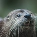 Otterday! And Open Thread.