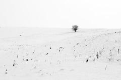 solitude (teodor cucu) Tags: winter bw white snow black tree scenery alone loneliness silence simplicity romania minimalism transylvania miclosoara