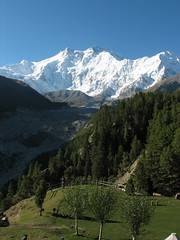 Nanga Parbat, Pakistan (Marc_P98) Tags: morning pakistan sunlight snow tree ice grass rock view meadow peak glacier fairy summit himalaya nanga parbat raikot