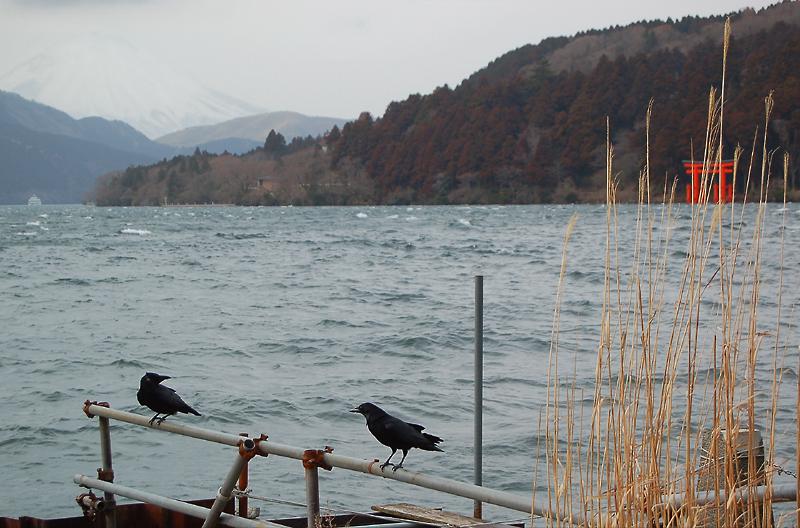 _ravens_