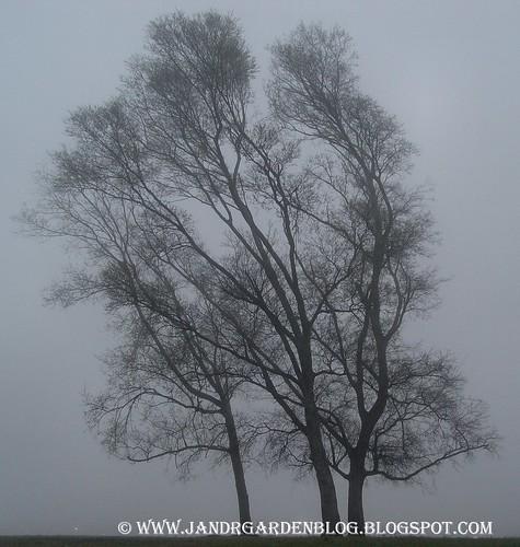 Single Mist