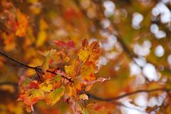 DSC_1557 (mdpayne) Tags: fall boston ma picis october2007