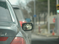 Mirror (nyperson) Tags: dog car huskie
