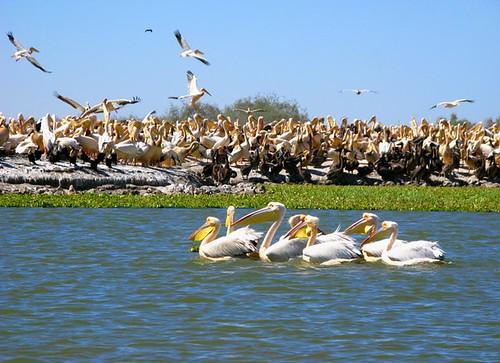 Park Oiseaux du Djoudj. Senegal por acheemete.
