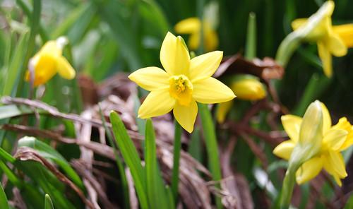 Spring Awakening 13