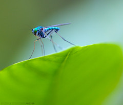 Living on the Edge (Kausthub) Tags: india macro animals insect wildlife dslr 2009 soe flickrsbest photographyrocks mywinners efllens platinumphoto colorphotoaward canonef100mmf28macrolens canoneos5dmarkii theperfectphotographer rubyphotographer