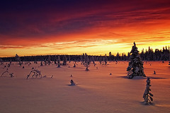 Reflectiveness (Antti-Jussi Liikala) Tags: travel trees winter light sunset shadow red sky cloud sun white snow ski cold colour reflection tree ice night clouds forest trekking suomi finland d50 gold lights golden evening frozen nikon warm exposure mood ray glow skiing shadows purple dusk air horizon lappland north silhouettes arctic reflect lapland rays wilderness polar nikkor lumi talvi spruce mets warmlight ilta lappi coldness auringonlasku articcircle sodankyl kylm abigfave colorphotoaward vanagram cffaa