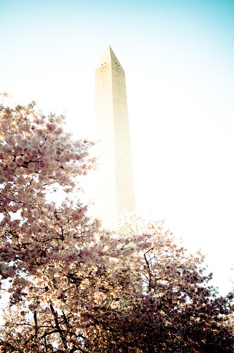 Rising through the blossoms