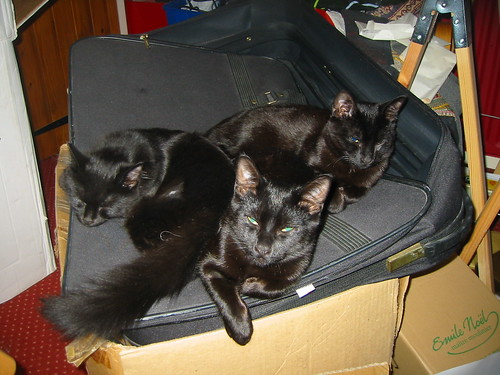 kittens ready for packing