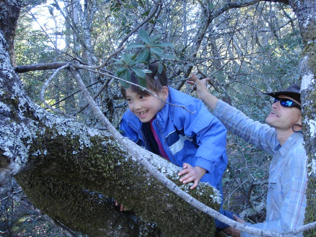 Aurelia climbs the tree