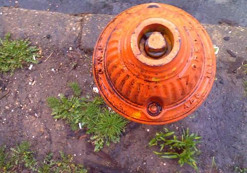 rain and hydrant