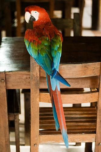 12-parrot