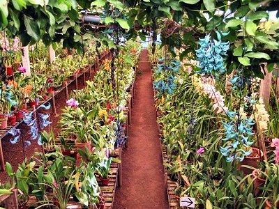 20090424-rq-Quinta da Boa Vista-4 Vinha de Jade e orquídeas