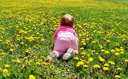 Crawling in the dandelions