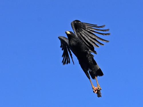 blackhawk5