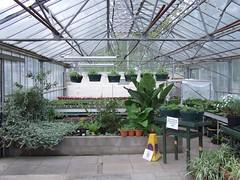 The Greenhouse - Stapenhill Burton on Trent