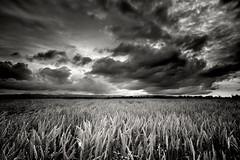 (peterpalmquist) Tags: blackandwhite storm field rain clouds rural stanislaus wheat turlock crowslanding blackwhitephotos abigfave nikond90 theperfectphotographer tokina1116mm flickrlovers 100commentgroup