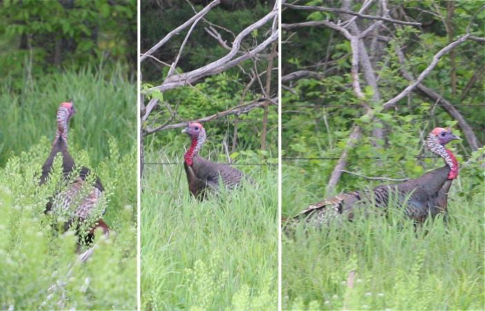 05-14-turkey