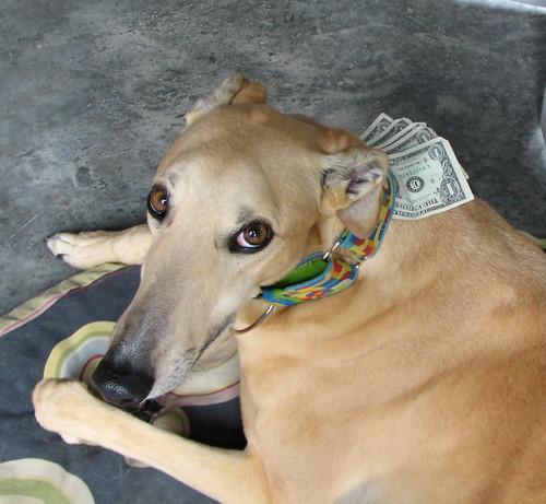 I wanna go to the dog park