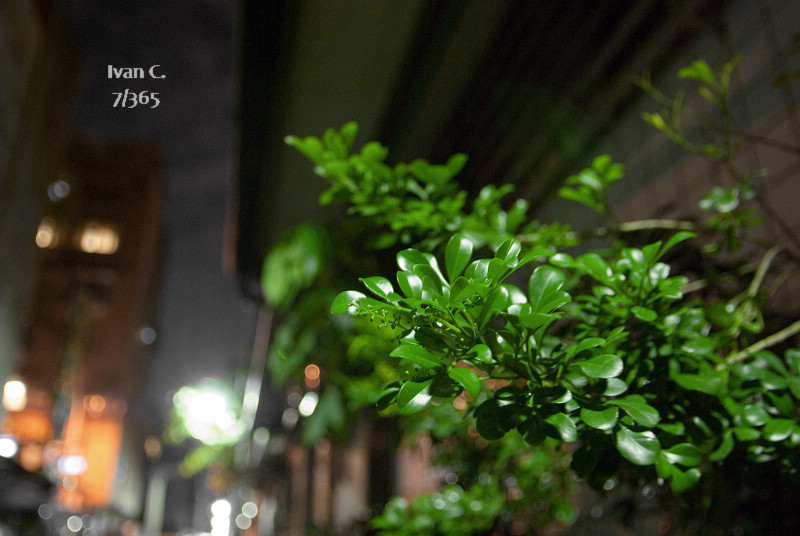 Project 365 1~120 (6/11更新)