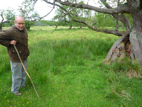 Chris Leyland, manager of the cattle, takes us on a tour - the park has some ancient alder trees