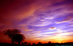 I Wandered Lonely as a Cloud...... (law_keven) Tags: trees sunset sky clouds suffolk silhouettes essex colchester ipswich explore500 vosplusbellesphotos