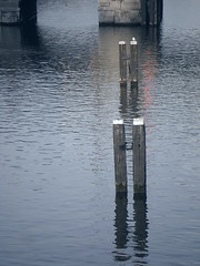 Amsterdam (aliceclarkemell) Tags: christmas bridge blue lake cold amsterdam december pigeon poles
