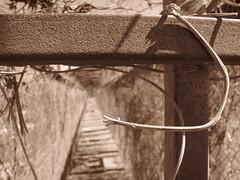 Recuerdos de infancia (alexgrod photos) Tags: sepia sonora angel puente canal nogales nia avestruz prima sobrina independencia espinas mirna navojoa nieta delaspilas