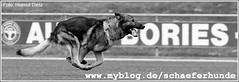myblog_schaeferhunde_header