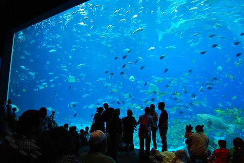 ADP_Ocean_Voyager[2009]