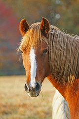 2008 Nov 02 037_edited-1 (simplegiftsphoto) Tags: horses ourkentucky