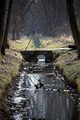 Petit pont dans la rserve des Grangettes (laperlenoire) Tags: bridge nature water canon eos eau reserve lac delta pont leman villeneuve valais rhone vaud ruisseau bouveret digitalcameraclub grangettes 5dmarkii