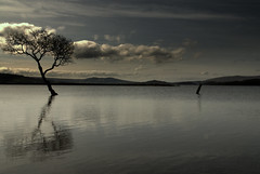 One and a half... (Nicolas Valentin) Tags: reflection tree water scotland spring lochlomond vosplusbellesphotos