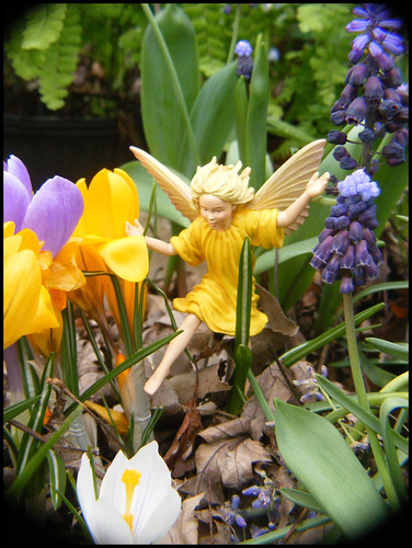 ... Matthaei Botanical Gardens On Dixboro Road. The Crocus Fairy