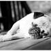 Sunbather by [Christine]