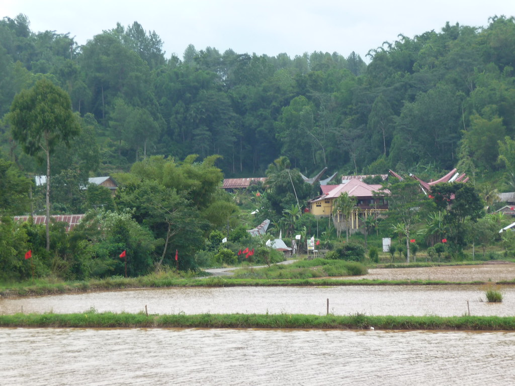 Pays Toraja Visite 3 (105)