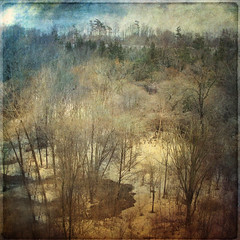 View from my balcony (Rose Mist) Tags: texture nature photoshop canon square ut layers bsquare frommybalcony g9 artlibre rosemist