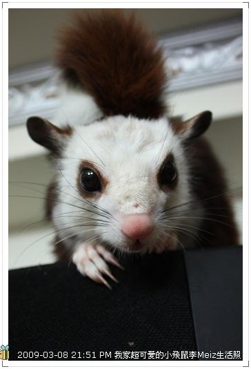 09年二三月小飛鼠Meiz生活照 (16)